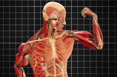 Viaje al interior del cuerpo humano impresionante il blog for Cuerpo humano interior
